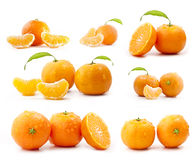 Tangerines collection Royalty Free Stock Photos