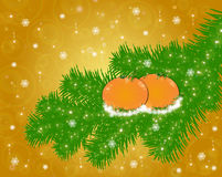 Tangerines on a fir-tree branch Stock Photo