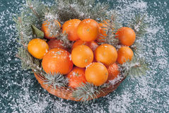 Tangerines and fir twigs on green background Stock Photo