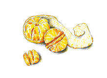 Tangerines fruits are isolated on a white background. Color sketch felt-tip pens. Tropical fruit. Handwork. Fast schematic drawing Royalty Free Stock Photos