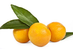 Tangerines with green leaves Stock Photography