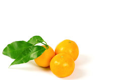 Tangerines with green leaves. On white Royalty Free Stock Photo