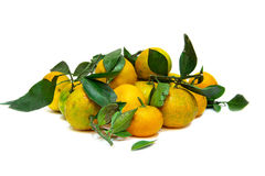 Tangerines with green leaves Royalty Free Stock Photo