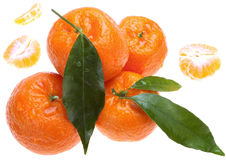 Tangerines with green leaves. Juicy tangerines. isolated on white background stock image