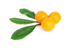 Tangerines isolados no fundo branco Foto de Stock Royalty Free