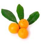 Tangerines isolados no fundo branco Fotografia de Stock Royalty Free
