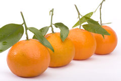 Tangerines isolated on white. Row of tangerines isolated on white Royalty Free Stock Images