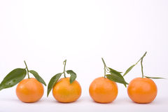 Tangerines isolated on white. Row of tangerines isolated on white Royalty Free Stock Photo