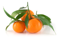 Tangerines with leaves. Few tangerines with leaves on white background Royalty Free Stock Photography