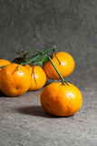 Tangerines with leaves on the gray background. Royalty Free Stock Image