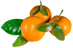 Tangerines with leaves. Isolated in white background royalty free stock photo
