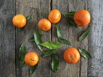 Tangerines with leaves Stock Images
