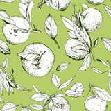 Tangerines with leaves, seamless green pattern. Hand drawn Royalty Free Stock Photos