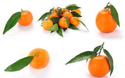 Tangerines with leaves on white background. Some tangerines on white background stock photo