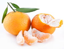 Tangerines with leaves. Stock Images