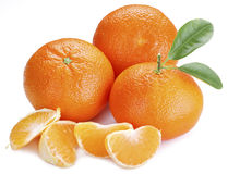 Tangerines with leaves. Royalty Free Stock Photo