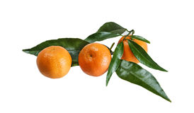 Tangerines with leaves on a white background. Isolated royalty free stock images