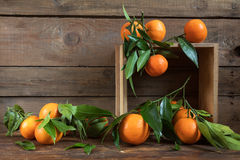 Tangerines with leaves on wooden box Royalty Free Stock Photos