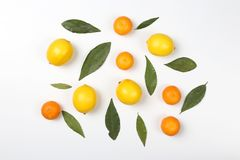 Tangerines and lemons with leaves on a white background