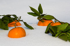 Tangerines lie in the snow Stock Photo
