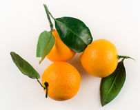 Tangerines on a light background Stock Photos