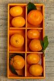 Tangerines or Mandarin orange Royalty Free Stock Image
