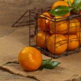 Tangerines or Mandarin orange Royalty Free Stock Photo