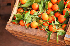 Tangerines mandarins Royalty Free Stock Photography