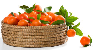 Tangerines or mandarins with leaves in a great  basket Stock Images