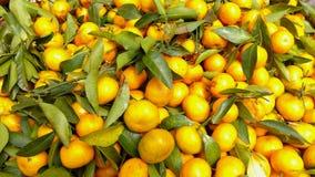 Tangerine. Tangerins on the market in Myanmar Stock Photography