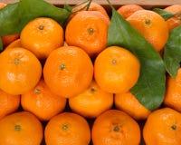 Tangerines na drewnianym talerzu Obrazy Stock