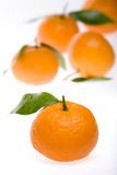 Tangerines na terra da parte traseira do branco Fotografia de Stock Royalty Free