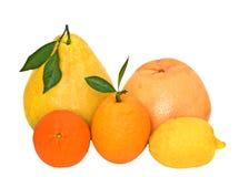 tangerines pamelo лимона грейпфрута померанцовые Стоковые Изображения