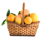 Tangerines, pamplumossas e laranjas na cesta Imagem de Stock