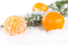 Tangerines with a pine branch on snow Royalty Free Stock Images