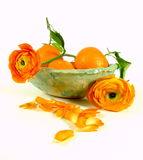 Tangerines with ranunculus Stock Photography