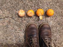 Tangerines. A sequence of small tangerines Stock Photo