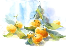Tangerines with Stems and Leaves Citrus Fruit Watercolor Still Life Illustration Hand Painted Stock Image
