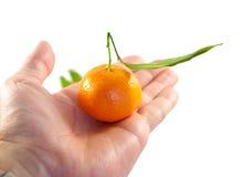 Tangerines studio photo Stock Photo