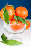 Tangerines in  vase on blue background Stock Image