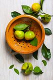 Tangerines in a vintage colander stock photography
