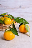 Tangerines with water drops Royalty Free Stock Image