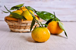 Tangerines with water drops Stock Photography