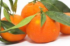 tangerines on white Royalty Free Stock Photos