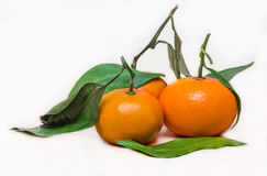 Tangerines on white. Tangerine with leaves on a white background Royalty Free Stock Image