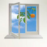 Tangerines in window Stock Photo