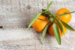 Tangerines z liśćmi obrazy royalty free
