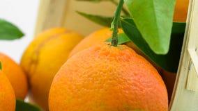 Tangerines z liśćmi w koszu zbiory