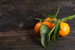 Tangerines z liście fotografia royalty free