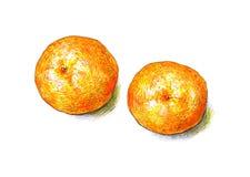 Tangerinfrukter isoleras på en vit bakgrund Färg skissar tuschpennor tropisk frukt handwork Snabb schematisk teckning Arkivfoton